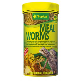 Tropical Meal Worms - Mehlwürmer